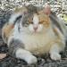 Thumbnail for National Pet Obesity Awareness Day